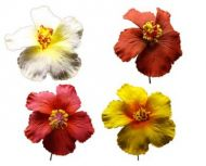 Hibiscus Foam Flowers - Assorted